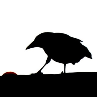 Crow Silo