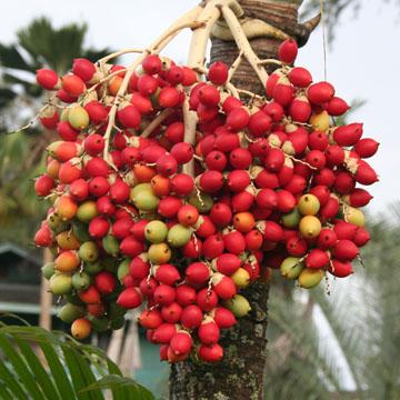 palmfrt.jpg