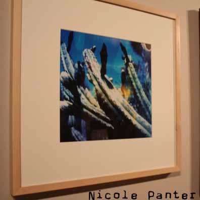 Nicole Panter