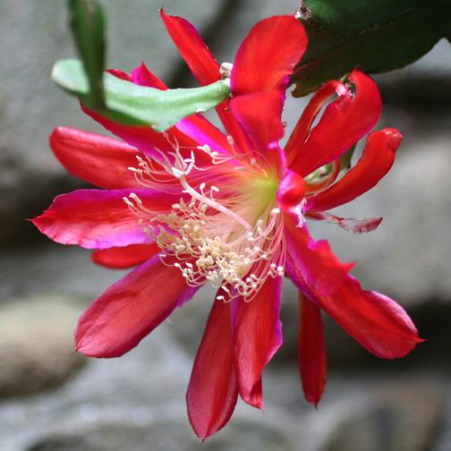 Epiphyte