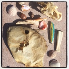 Baja Finds