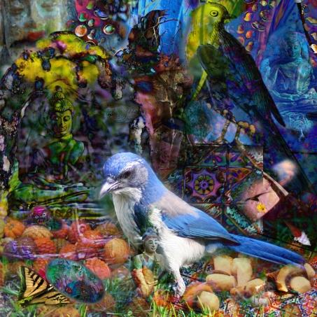 birdsandbuddhas