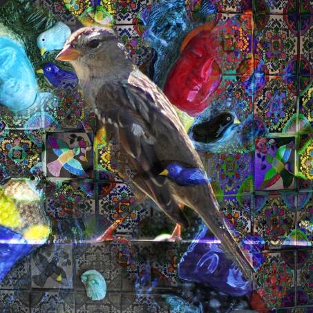birdsofpeace