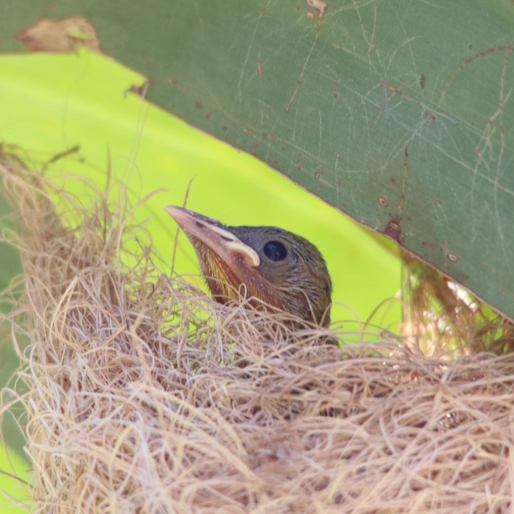 babycowbird0374