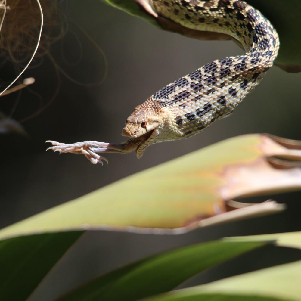 snake0545