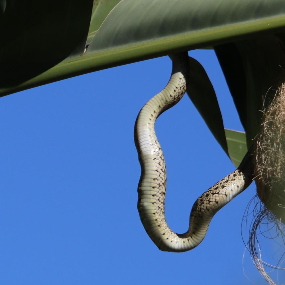 snake0551